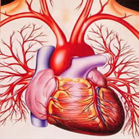 Bachelor Degree in Cardiovascular Technology (BCVT)